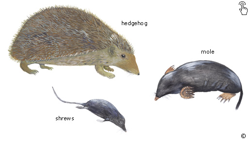 Examples Of Insectivores What are Marsupials, I...